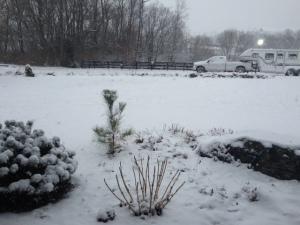 snow-lex