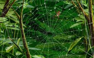 spider-web-79920